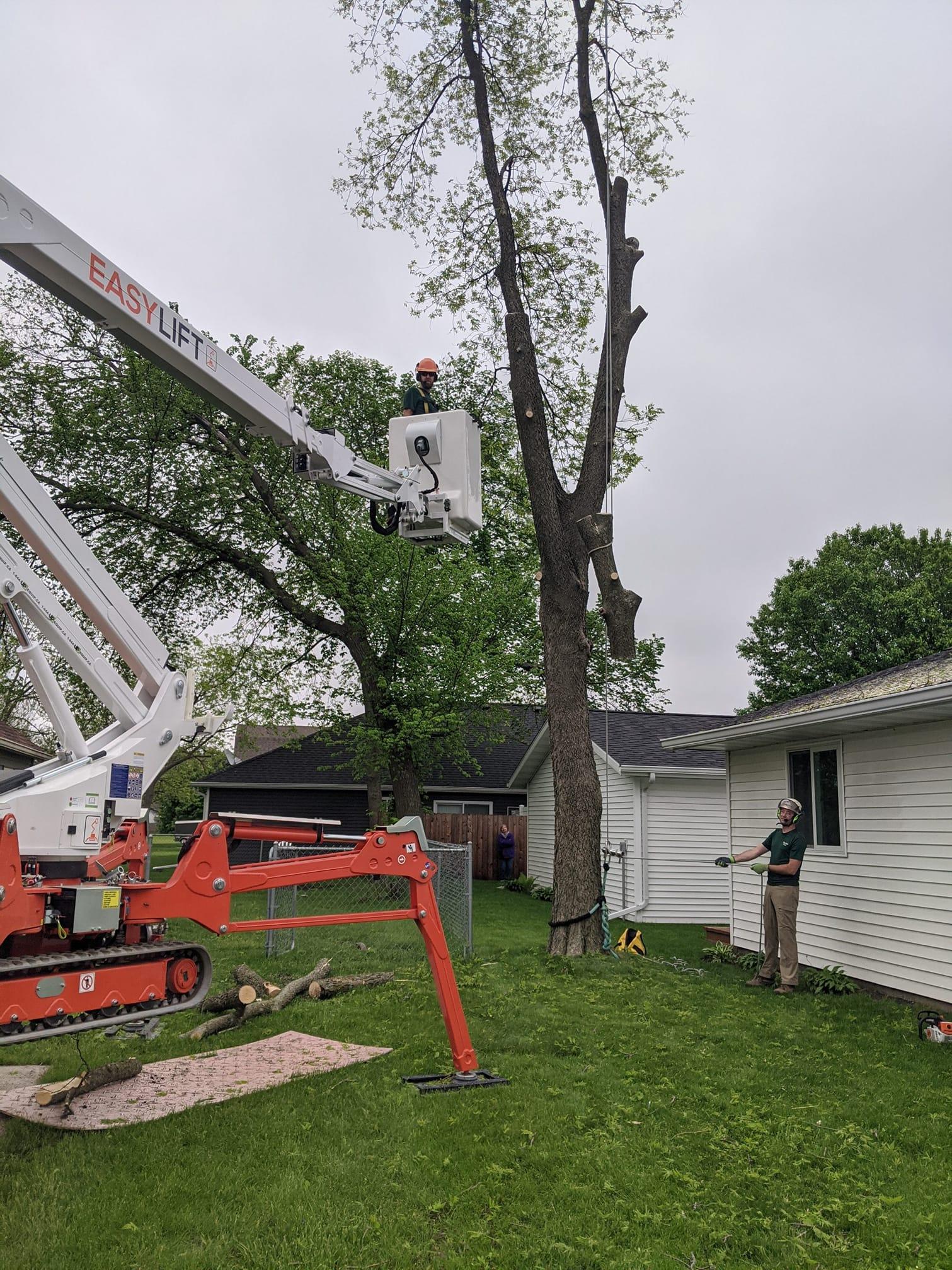 ¡La industria del cuidado de los árboles en los EE. UU. adora las arañas Easy Lift!